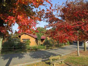 ロッジの前の木々も紅葉真っ盛り。
